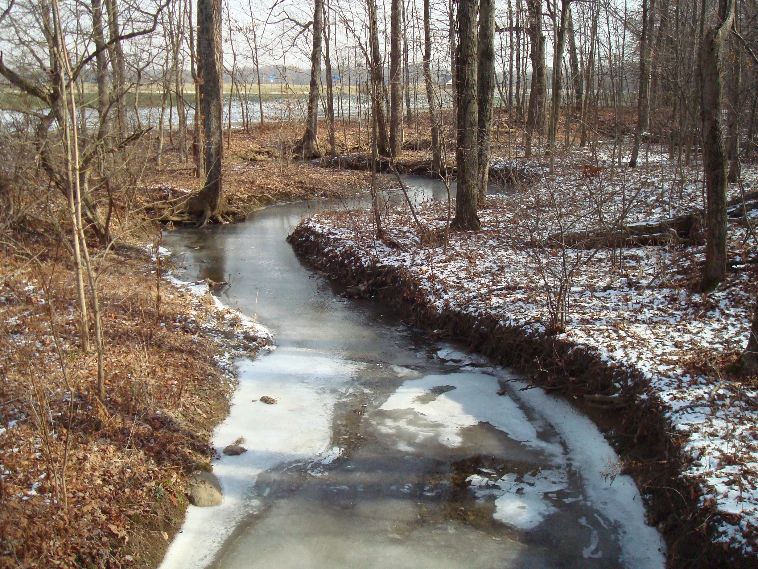Image of a wooded stretch of Wildcat Run runs through Liberty Park.
