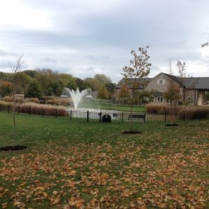 Trees and Pond Plants making a difference at Sunny 95 Pond in Upper Arlington
