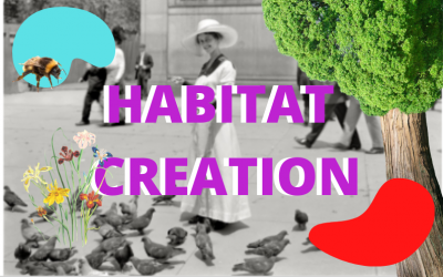 Wildlife Habitat Creation for a Healthier Watershed