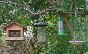 Four different types of bird feeders.