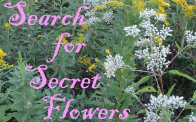 "Plant some late blooming ""secret flowers"""